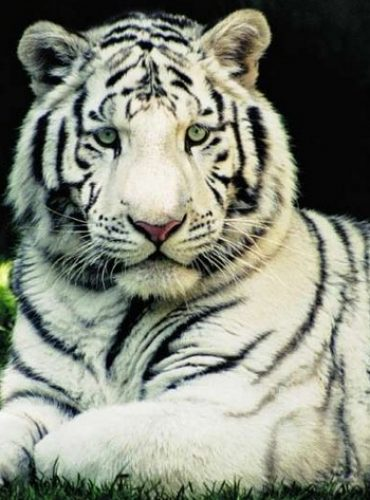 Try Out Bandhavgarh National Park for a Mesmeric Experience