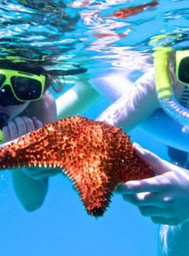8 Snorkeling Destinations to Witness Marine Life in 2021